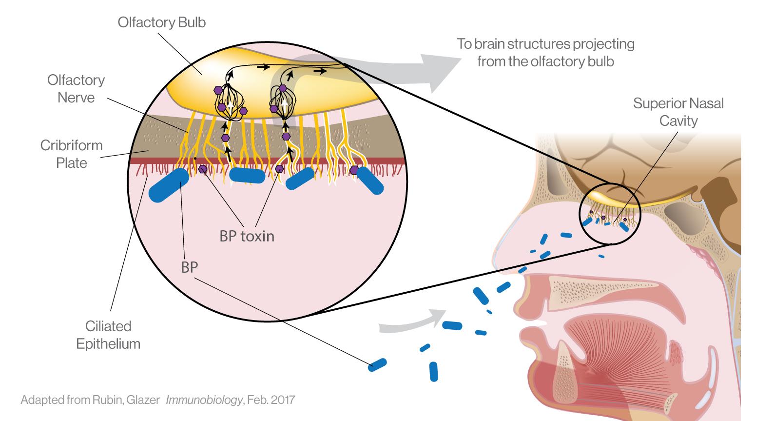 ILiAD Biotechnologies